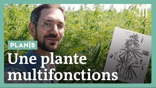 Documentaire Pourquoi la France se remet massivement au chanvre
