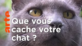 Documentaire Secrets de chats