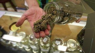 Sommelier en cannabis: un métier en développement