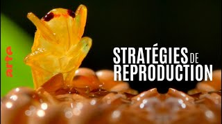 Stratégies de reproduction : les clés du succès