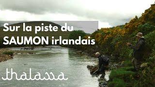 Sur la piste du saumon irlandais