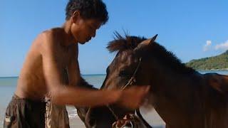 Terres de légendes | Les chevaliers de l'ile de Sumba