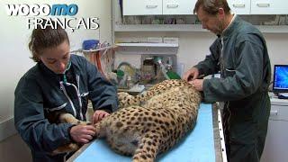 Vétérinaires - Au secours des animaux