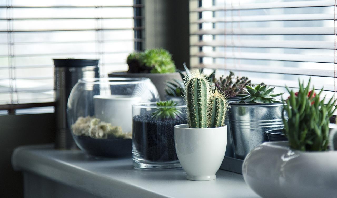 Plantes d'intérieur : Quels sont leurs bienfaits sur la santé ?