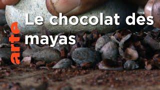 Belize, le cultivateur de cacao