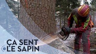 Documentaire Bois suisse