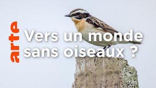Disparition des oiseaux : une perte immense