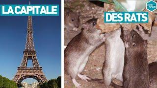 Documentaire La capitale des rats