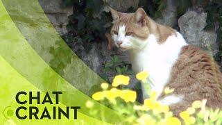 La nuisance des chats