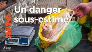 Documentaire La peste porcine en Europe