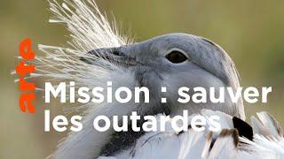 La science au secours des oiseaux