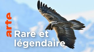 Documentaire Le gypaète barbu | Les animaux sauvages d'Europe