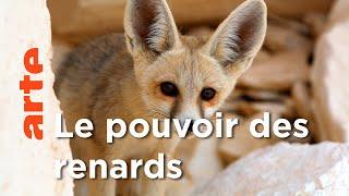 Documentaire Les Renards | Les superpouvoirs des animaux