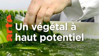 Documentaire Les algues – Des pouvoirs insoupçonnés
