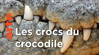 Documentaire Les crocodiles | Les superpouvoirs des animaux