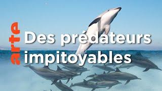 Documentaire Les dauphins | Les superpouvoirs des animaux