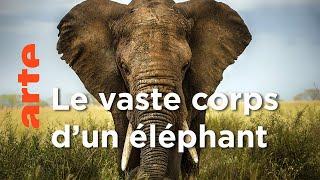 Documentaire Les éléphants   Les superpouvoirs des animaux