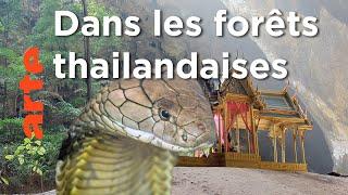 Les forêts centrales | Thaïlande, la beauté sauvage