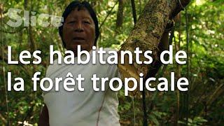 Les gardiens de la forêt en Guyane française