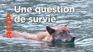Documentaire Les loups pêcheurs du Canada