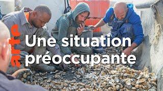 Pêche aux palourdes illégale au Portugal