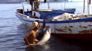 Pêcheurs de requins