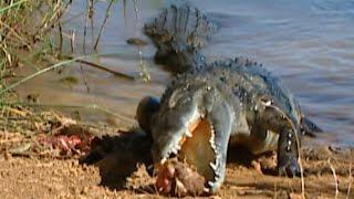 Documentaire Terres de légendes | Les crocodiles sacrés du lac Anivorano