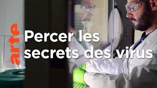 Virus et épidémies : l'île-laboratoire