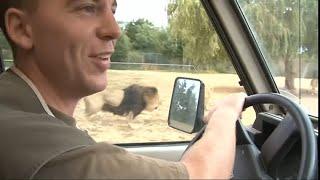 Documentaire Zoo de Thoiry : un safari aux portes de Paris