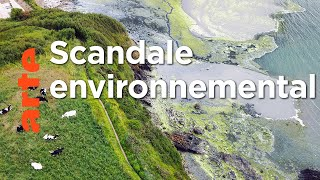 Algues vertes, le littoral empoisonné
