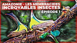 Amazonie - Les membracides, incroyables insectes - Episode 1