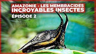 Amazonie - Les membracides, incroyables insectes - Episode 2
