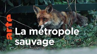 Documentaire Berlin et ses animaux