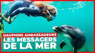 Documentaire Dauphins ambassadeurs, les messagers de la mer