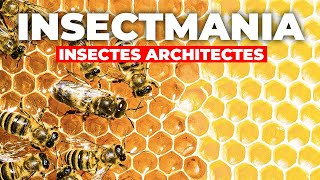 Insectmania - Insectes Architectes
