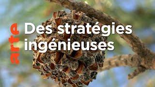 La vie secrète des plantes : propagation (1/3)