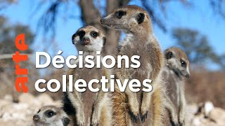 Documentaire Le chef consulte | Démocraties animales (1/2)