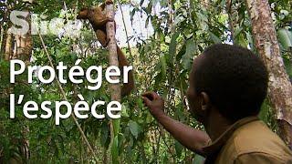 Madagascar : les gardiens des lémuriens