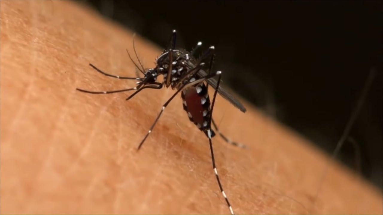 Moustiques tigres : l'invasion