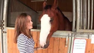 SPA : j'adopte un cheval !