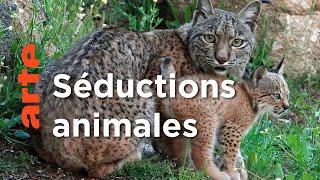 Séductions animales dans la péninsule ibérique