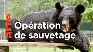 Vietnam : au secours des ours noirs d'Asie