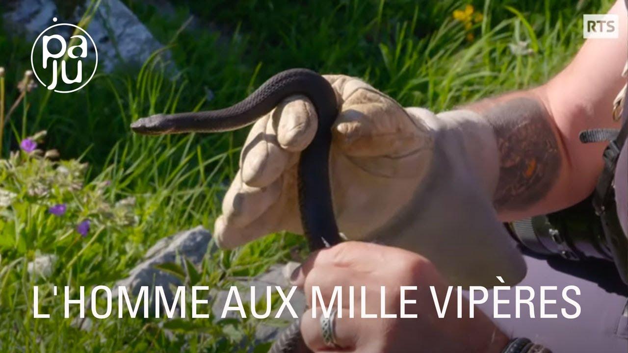 Documentaire Yves observe et protège les vipères depuis plus de 40 ans