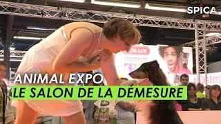 Animal expo : le salon de la démesure