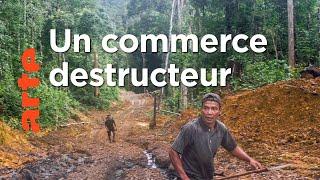 Bornéo - La forêt disparue