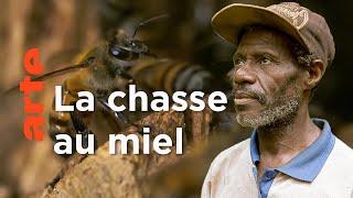 Cameroun, le miel sacré du peuple Baka | Les maîtres des abeilles