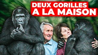 Documentaire Deux gorilles à la maison