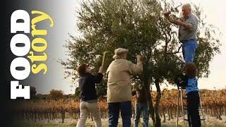Et si on faisait notre propre huile d'olive ?