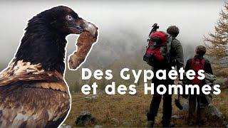 Documentaire Le Gypaète, oiseau mythique des Alpes