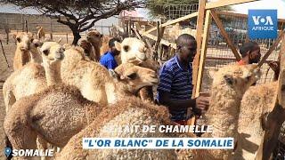 Documentaire Le lait de chamelle, «l'or blanc» de la Somalie